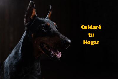 mejor perro para tu casa el doberman
